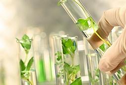 GMO Tests