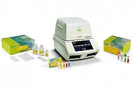 PCR Detection Kits
